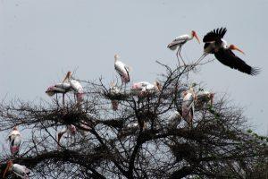 Most Popular Bird Sanctuaries in India For Bird Watching